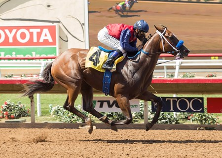 Miss Sunset wins the 2017 Fleet Treat Stakes
