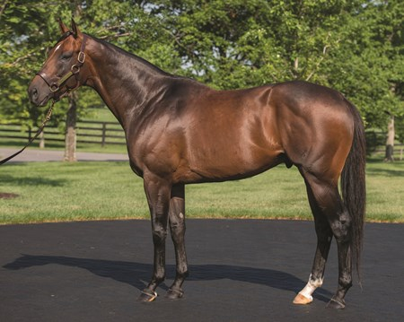 OVERANALYZE, WinStar Stallions, June 2014 , 2nd Monday