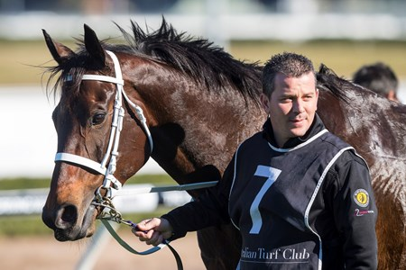 Winx after winning the 2017 Warwick Stakes (G2)