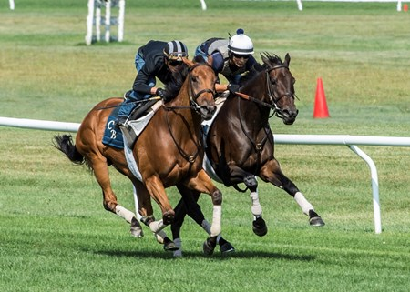 Lady Eli with regular jockey Irad Ortiz Jr., left works in tandem with Antonoe with exercise rider Walter Milazquez at the Oklahoma Training Center track Sunday Aug. 20, 2017 in Saratoga Springs, N.Y.