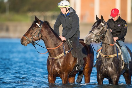 Winx swims at Kyeemagh Beach the day after winning her 18th successive race, the Warwick Stakes (G2)