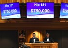 Hip 181 was purchased on behalf of LNJ Foxwoods