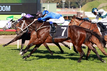 Winx runs down her rivals in the Bob Ingham Warwick Stakes