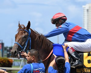 Edgard Zayas gives Gunnevera a pat after winning the Tangelo Stakes