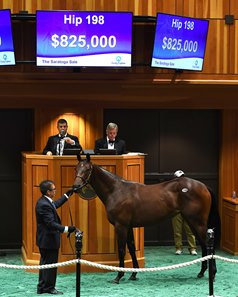 A Strong Mandate filly from the consignment of Baccari Bloodstock sold for $825,000