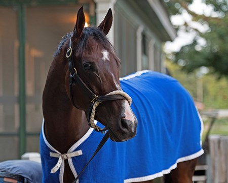 Songbird Saratoga racecourse in Saratoga Springs, N.Y. on Aug. 25, 2017 Aug. 25, 2017 in Saratoga Springs, New York.