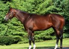 Straight Fire was bred by Spendthrift Farm and purchased at auction by Solis/Litt Bloodstock