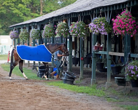 Songbird walking into barn. Saratoga racecourse in Saratoga Springs, N.Y. on Aug. 25, 2017