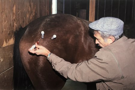 Dr. Marvin Cain performs an acupuncture procedure on a horse in 1986