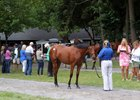 Activity was brisk in advance of the Fasig-Tipton New York-bred sale