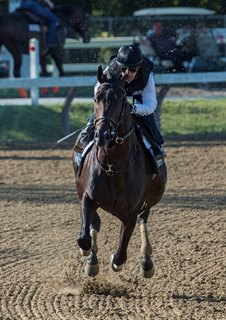 Cloud Computing puts in his final work for the Travers at Saratoga Race Course Aug. 19
