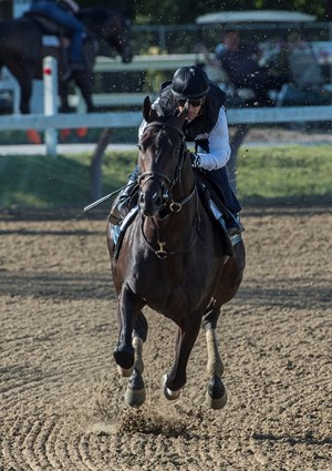 Cloud Computing puts in his final work for the Travers at Saratoga Aug. 19