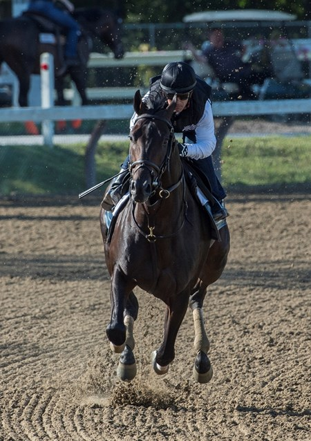 Cloud Computing with regular jockey Javier Castellano up puts in his final work for the Travers Stakes on the main track at the Saratoga Race Course Saturday Aug. 19, 2017 in Saratoga Springs, N.Y.
