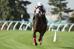 Cool Catomine works six furlongs in 1:14 4/5 over the Woodbine turf Aug. 9