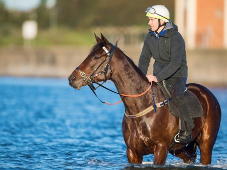 Winx swims at Kyeemagh Beach the day after winning her 18th successive race, the Warwick Stakes