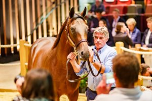 Lot 160, a Dubawi colt purchased by Kerri Radcliffe that topped the Arqana August yearling sale