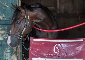 Classic Empire at Saratoga in early August