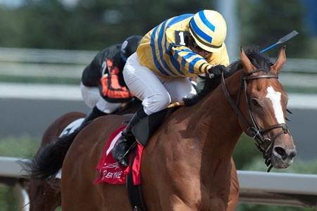 Jockey Sheena Ryan guides Be Vewy Vewy Quiet to victory in the 2017 Clarendon Stakes