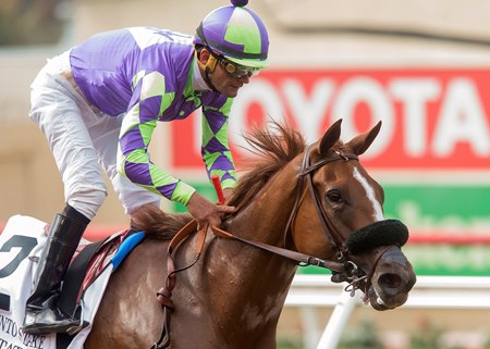 Homebred Spectator bested a field of high-priced fillies in the Sorrento Stakes