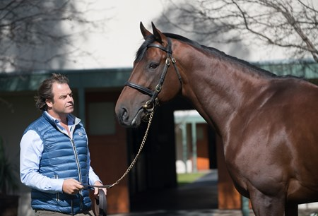 American Pharoah upon arrival at Coolmore Australia with Tom Magnier