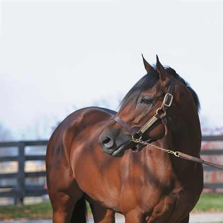 Quality Road (2006, Elusive Quality--Kobla, by Strawberry Road, $35,000, Lane's End Farm, Versailles, Ky.).
