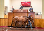 Lot 295, a Dark Angel colt, topped the Aug. 30 session at Goffs' UK premier yearling sale