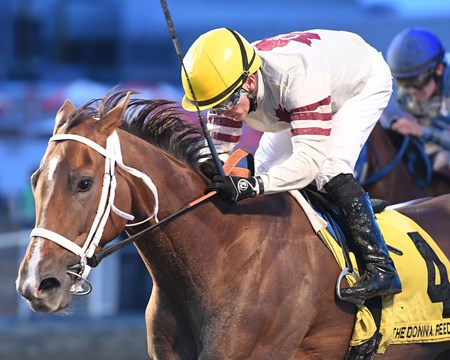 Mywomanfromtokyo wins the 2017 Donna Reed Stakes