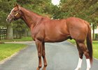 Ken Ramsey called Hill 'n' Dale 'the best fit' for champion turf sire Kitten's Joy