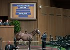 A Violence-Melody Lady yearling sells for $850,000 during Book 2