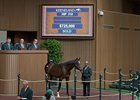 Hip 319, a Violence colt from the Warrendale consignment, sells for $725,000 Sept. 12