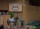 Hip 49, a Tapit colt, sells for $2.6 million at the Keeneland September sale