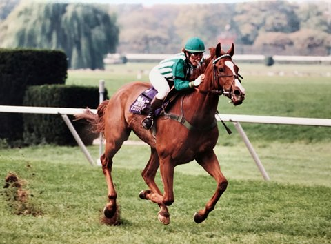 Lonesome Glory wins the 1993 Breeders' Cup Steeplechase
