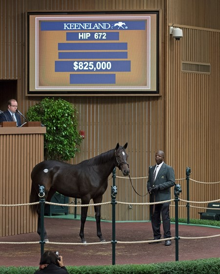 Hip 672 filly by Pioneerofthe Nile from R Gypsy Gold and Four Star Sales brings $825,000 from Ruiz Racing Stable Keeneland sales scenes at Keeneland September yearling sale Sept. 13, 2017 in Lexington, Kentucky.