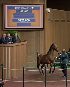 Hip 820, a colt by Curlin out of Sumptuous, sells for $725,000