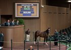 Hip 1921, a son of More Than Ready, sells for $625,000 Sept. 17