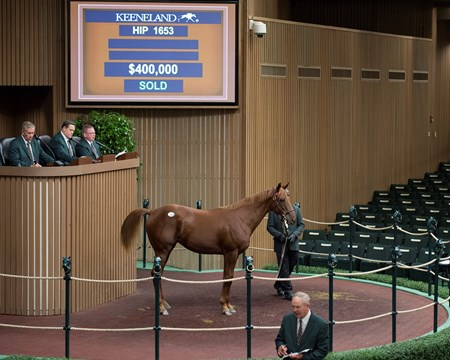 Hip 1653 from Goforitmrsmiller and Hermitage September yearling sale at Keeneland