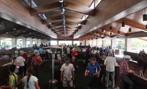 Keeneland September sale scene