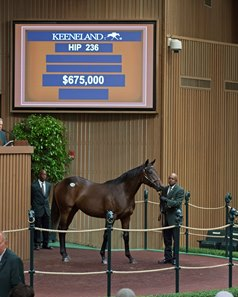 Hip 236 sold for $675,000 at the Keeneland September yearling sale