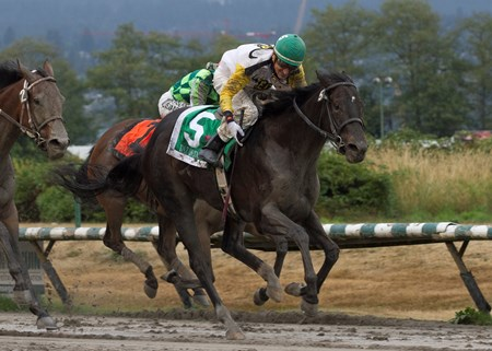 Daz Lin Dawn wins the British Columbia Oaks on 09/09/17 with rider Richard Hamel