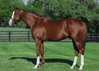 Will Take Charge leads the stallion roster at Three Chimneys Farm for 2018