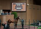 Hip 391, a Cairo Prince colt, sells for $900,000 at the Keeneland September sale