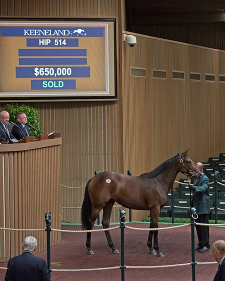 Hip 514 filly by Scat Daddy from Misty Lady and Elm Tree Farm, agent for Stonestreet was purchased for $650.000 by Wesley Ward