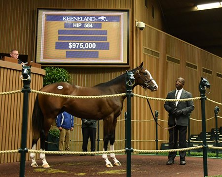 Hip 564, a colt by Will Take Charge, brought $975,000