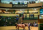 Lot 330, a Frankel colt, sold to Justin Casse on behalf of Zayat Stables for €1.6 million