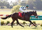 Daddys Lil Darling captures the Dueling Ground Oaks in course-record time