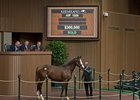 The last Tapit yearling of the sale goes through the ring Sept. 16