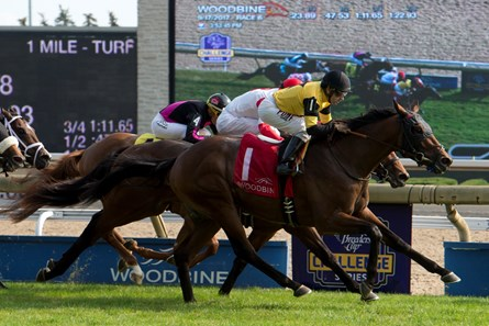 Untamed Domain Horse Profile Bloodhorse