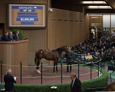 Hip 105, 2017 Keeneland September Sale