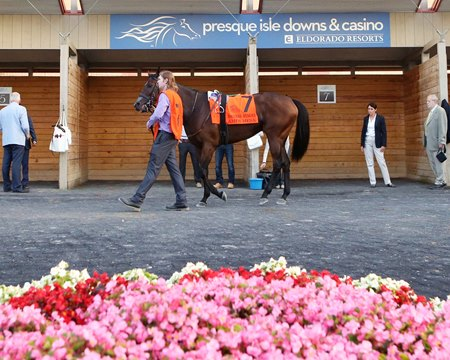 The paddock at Presque Isle Downs
