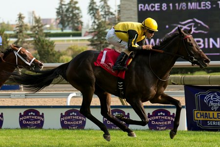 Quidura takes the Canadian Stakes at Woodbine Sept. 16 in her most recent effort